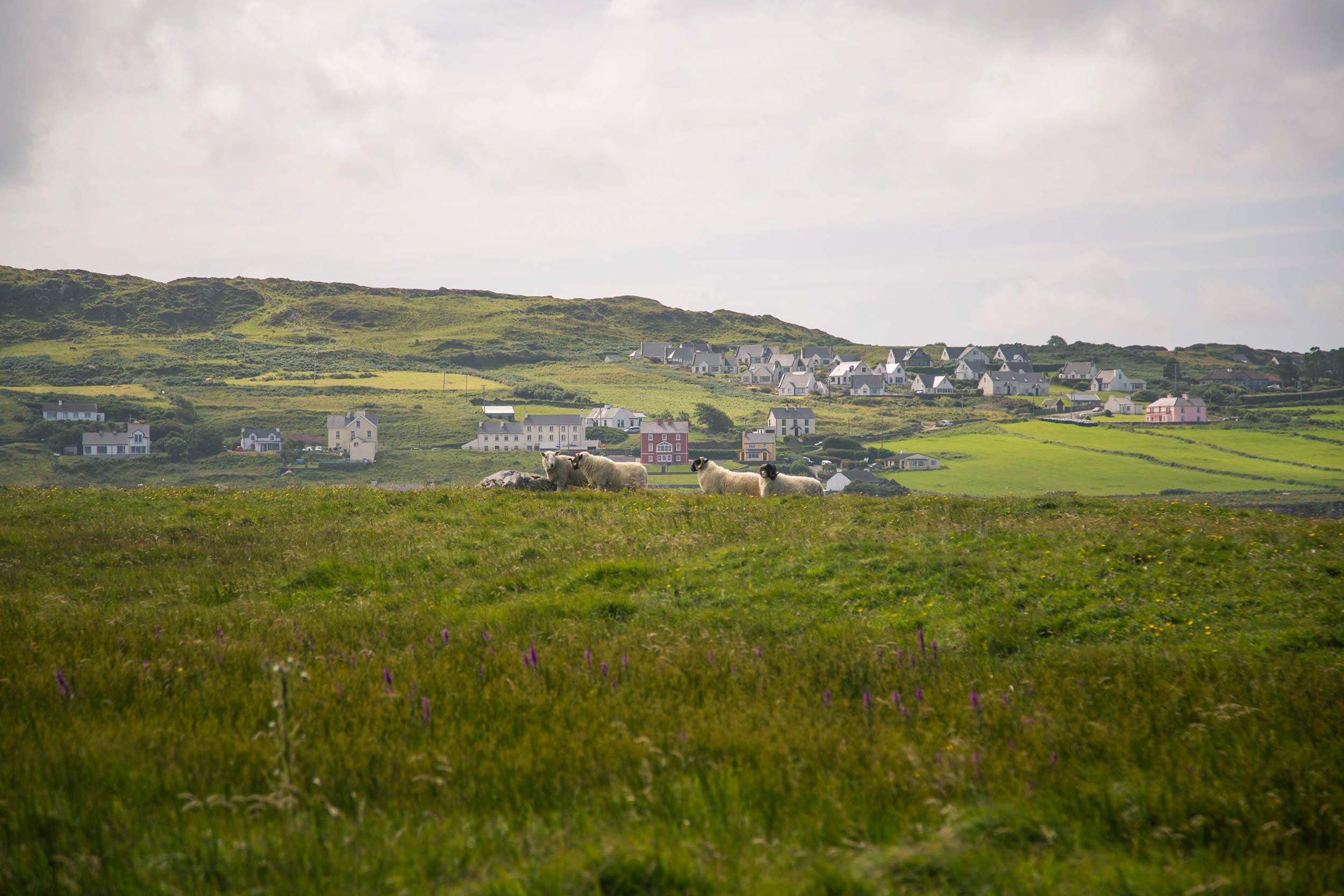 IRELAND_DONEGAL_PORTNOO_0010